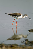 BRD 13 MC0038 01