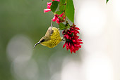 BRD 13 MC0040 01