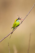 BRD 13 MC0045 01