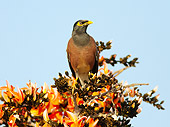 BRD 13 MC0047 01