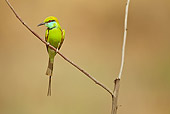 BRD 13 MC0048 01