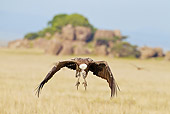 BRD 13 MC0051 01