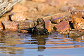 BRD 13 MC0053 01