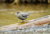 BRD 13 MC0054 01
