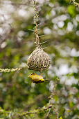 BRD 13 MC0055 01