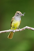 BRD 13 MC0070 01