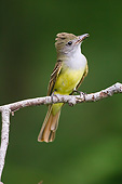 BRD 13 MC0071 01