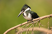 BRD 13 MC0073 01