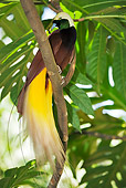 BRD 13 MH0005 01