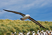 BRD 13 MH0006 01