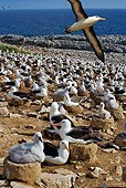 BRD 13 MH0007 01