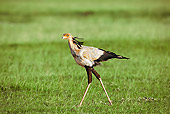 BRD 13 MH0010 01