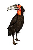 BRD 13 MH0014 01