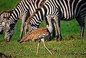 BRD 13 MH0015 01