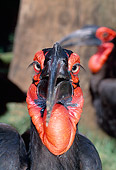 BRD 13 MH0020 01