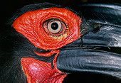 BRD 13 MH0021 01