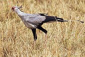 BRD 13 MH0025 01
