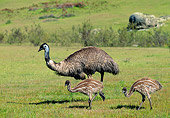 BRD 13 MH0028 01