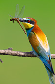BRD 13 MH0034 01
