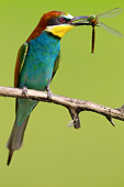 BRD 13 MH0035 01