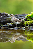 BRD 13 MH0042 01