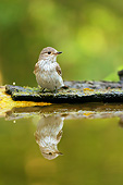 BRD 13 MH0043 01