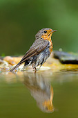 BRD 13 MH0044 01
