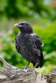 BRD 13 PE0001 01