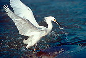 BRD 13 RK0051 06
