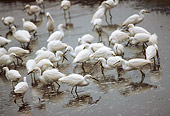 BRD 13 RK0056 02
