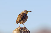 BRD 13 SK0015 01