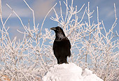BRD 13 SK0018 01