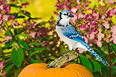 BRD 13 TK0020 01