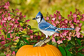 BRD 13 TK0021 01