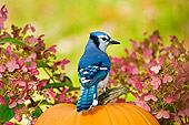 BRD 13 TK0022 01