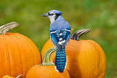 BRD 13 TK0023 01