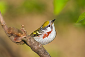 BRD 13 TK0028 01