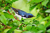 BRD 13 TK0032 01