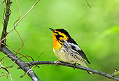 BRD 13 TK0033 01