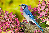 BRD 13 TK0043 01