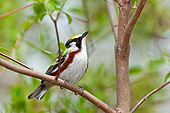 BRD 13 TK0045 01