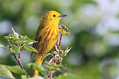 BRD 13 TK0049 01