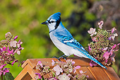 BRD 13 TK0053 01