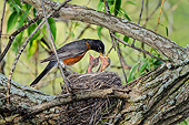 BRD 13 TK0054 01