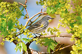 BRD 13 TL0067 01