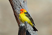 BRD 13 TL0069 01