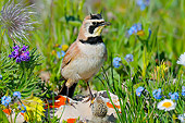 BRD 13 TL0071 01