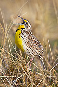 BRD 13 TL0076 01