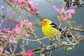 BRD 13 TL0078 01