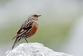 BRD 13 WF0001 01